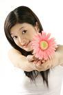 女人花0048,女人花,美容,粉色花朵