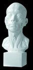 石膏像0083,石膏像,静物,形态 生动 静物