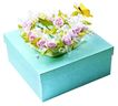 礼物0090,礼物,静物,新鲜 鲜花 艳丽