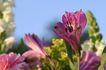 香水元素0029,香水元素,静物,花朵 鲜花 绽放