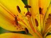 香水元素0039,香水元素,静物,花蕊 花瓣 植物