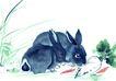 十二生肖0024,十二生肖,中国国画,灰兔 耳朵 生肖
