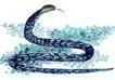 十二生肖0033,十二生肖,中国国画,蛇年 野生动物 毒蛇