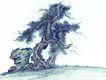 古树奇石0040,古树奇石,中国国画,苍松 岩石