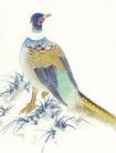 吉祥鸟0007,吉祥鸟,中国国画,鸟类 国画 美术