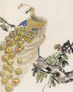吉祥鸟0009,吉祥鸟,中国国画,孔雀 高枝 鸟类 枝头 羽毛