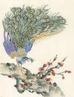 吉祥鸟0010,吉祥鸟,中国国画,姿态 开屏 优美 炫耀 羽翼