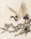 吉祥鸟0013,吉祥鸟,中国国画,鹤 美丽 高洁 象征 长颈