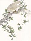 吉祥鸟0034,吉祥鸟,中国国画,树枝 伏鸟