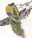 吉祥鸟0036,吉祥鸟,中国国画,鸟背 孔雀羽