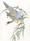 吉祥鸟0040,吉祥鸟,中国国画,鸟儿 展翅 水草