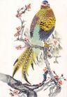 吉祥鸟0043,吉祥鸟,中国国画,