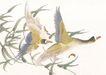 吉祥鸟0044,吉祥鸟,中国国画,