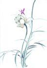 枝头飞乌0005,枝头飞乌,中国国画,蜻蜓 荷花 简洁