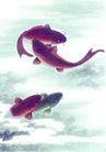 水族世界0009,水族世界,中国国画,鱼 鱼类 鲤鱼 池塘 成双成对