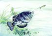 水族世界0039,水族世界,中国国画,