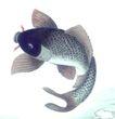 水族世界0051,水族世界,中国国画,精致国画 鱼类 清晰鳞片