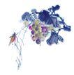 百态昆虫0009,百态昆虫,中国国画,国画 晕染 花鸟 功底 技巧