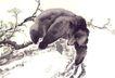 飞禽走兽0005,飞禽走兽,中国国画,拥抱 悬崖 突石