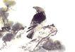飞禽走兽0013,飞禽走兽,中国国画,环顾 四周 警觉