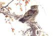 飞禽走兽0014,飞禽走兽,中国国画,猫头鹰 夜行 活动