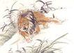 飞禽走兽0017,飞禽走兽,中国国画,潜行 草丛 埋伏