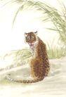 飞禽走兽0023,飞禽走兽,中国国画,豹子 花纹 草原