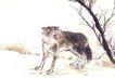 飞禽走兽0031,飞禽走兽,中国国画,狼狗 野狼 凶狠动物