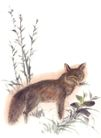 飞禽走兽0036,飞禽走兽,中国国画,黄鼠狼 猎物 杂草