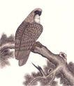 飞禽走兽0040,飞禽走兽,中国国画,