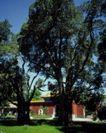 故宫0083,故宫,中国民间艺术,风格 树木 光线