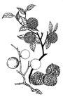 植物图案花纹0372,植物图案花纹,中国民间艺术,
