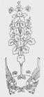 植物图案花纹0408,植物图案花纹,中国民间艺术,