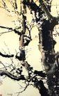 白梅之三,徐悲鸿,中国近代大师名画,