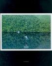 海报设计0021,海报设计,书籍装帧设计,飞鸟 树林 水镜