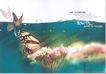 华北楼书专辑0044,华北楼书专辑,中国优秀房地产广告2005,激情 蝴蝶 异香