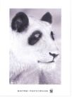 公益0016,公益,中国广告作品年鉴2004,白毛 熊猫 狗头