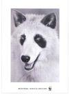 公益0017,公益,中国广告作品年鉴2004,小狗 狗耳朵 汪汪叫