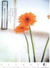 文化公共服务及其他0007,文化公共服务及其他,中国广告作品年鉴2004,花朵 杯子 新鲜空气