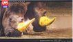 汽车及关联品0032,汽车及关联品,中国广告作品年鉴2004,犀牛 金角 力帆集团