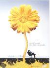 金融保险0019,金融保险,中国广告作品年鉴2004,向日癸 读书 见证成功