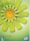 食品0015,食品,中国广告作品年鉴2004,心花怒放 向日癸 月光绿色