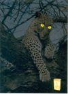 饮料0029,饮料,中国广告作品年鉴2004,大树 猎豹 发光的眼睛 饮料