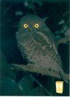 饮料0031,饮料,中国广告作品年鉴2004,猫头鹰 眼睛 魔卡