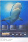家用电器广告创意0094,家用电器广告创意,国际知名品牌广告创意,鲨鱼 显示器 电脑