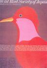 设计定位0049,设计定位,广告设计定位,啄木鸟 尖锐 眼珠