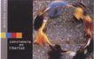 设计定位0083,设计定位,广告设计定位,旋转 速度 围成圆圈