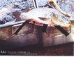 平面获奖作品六0072,平面获奖作品六,11届中国广告节获奖作品,鱼类