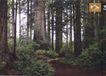 平面获奖作品四0090,平面获奖作品四,11届中国广告节获奖作品,树林 减速带 小道