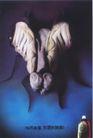 影视广播获奖作品一0088,影视广播获奖作品一,11届中国广告节获奖作品,昆虫 白色运动鞋 袜子